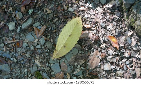 Leaf on the ground.