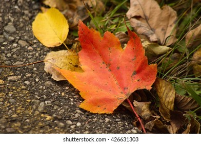 leaf on the ground with grass and blacktop as background. seasonal