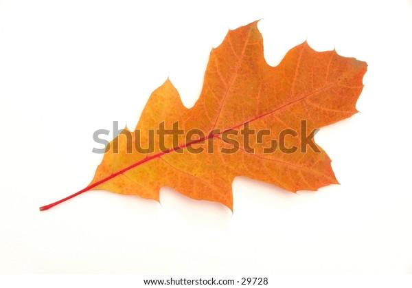 Leaf on white background.
