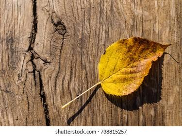 Leaf on the wooden background. Golden autumn