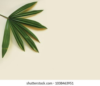 Leaf on yellow background. Flat lay, top view, Minimal style.