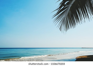 leaf of palm tree with beach and sky background