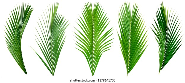 leaf palm,collection of green leaves pattern isolated on white background - Shutterstock ID 1179141733