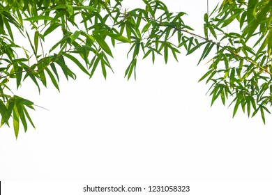 Leaf pattern leaves bamboo or abstract background . Green Energy and world for water day or National Forest Conservation Day.