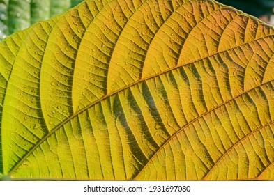 Leaf Pattern Lines Green Tones
