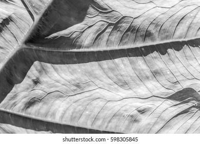 Leaf pattern in monochrome