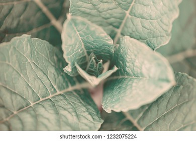 Leaf of a plant close up, stylized