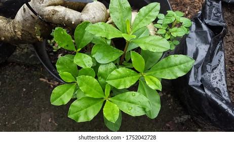 leaf plant green background nature