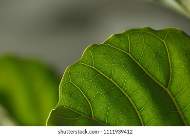 The leaf of the plant. The light falls on it, texture is clearly visible.