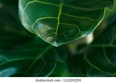 The leaf of the plant. The light falls on it, texture is clearly visible. Feels life.