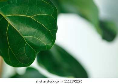 The leaf of the plant. Texture is clearly visible.