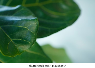 The leaf of the plant. Texture is clearly visible. Feeling life.
