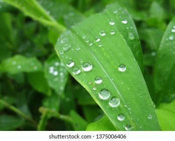 leaf in rainy season
