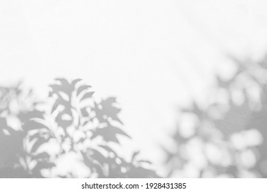 Leaf shadow and light on wall blur background. Nature tropical leaves tree branch and plant shade with sunlight from sunshine on white wall texture