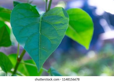 a leaf, in the shape of a heart, blows in the wind in Deering Oaks Park in Portland, Maine