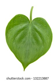 leaf in the shape of heart isolated on white