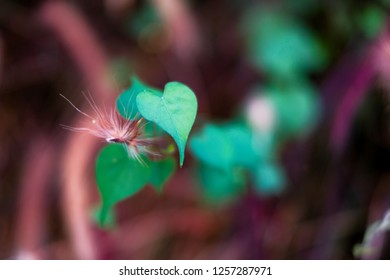 Leaf shaped like heart with blurry background, selective focus.
