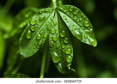 leaf with some drops morning dew  - Shutterstock ID 1858069729