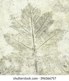 leaf stamp concrete.
