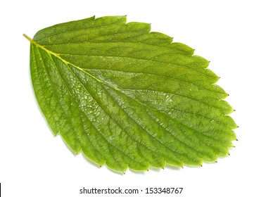 Leaf, strawberry leaf on the white background