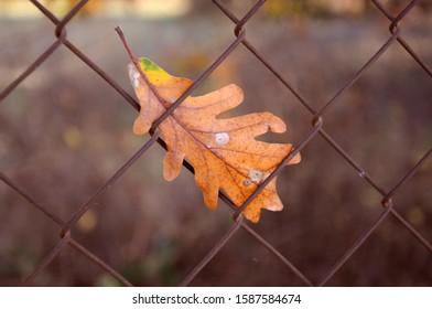 leaf stuck on a fence