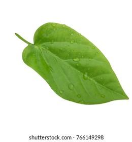 leaf of sweet granadilla isolated
