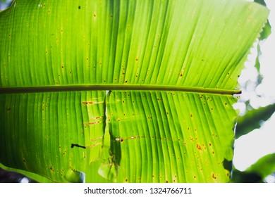 leaf textile background