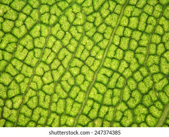 Leaf texture background