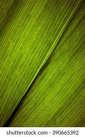 Leaf Texture Close Up.