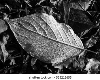 Leaf texture, detail, black and white