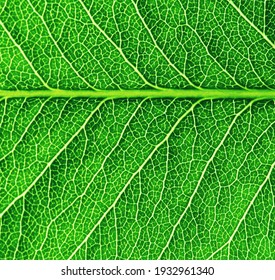 Leaf texture pattern for spring background. Macro of green leaves