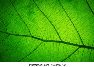 Leaf texture pattern for spring background,texture of green leaves,ecology concept