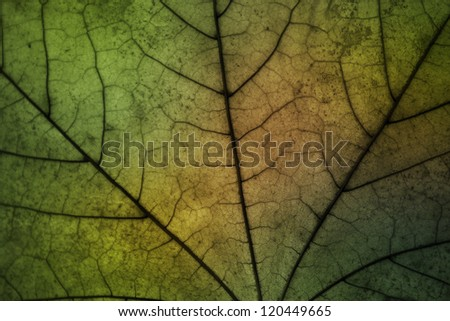 Leaf texture with vibrant colors.