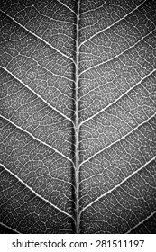 leaf texture white black and white effect