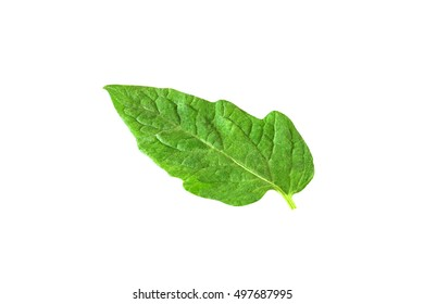 leaf of tomato isolated on white background with clipping path