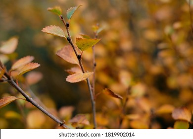 leaf and tree in Autum season in beautiful goldenhour light
