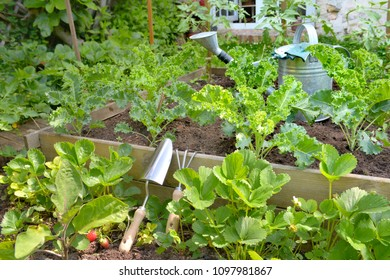 leaf of vegetable plants growing in a garden