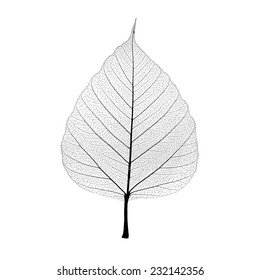 Leaf veins isolated on white background. include clipping path.
