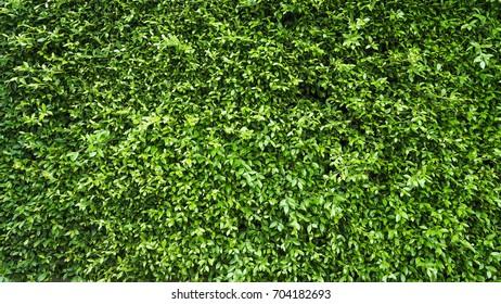 leaf wall background