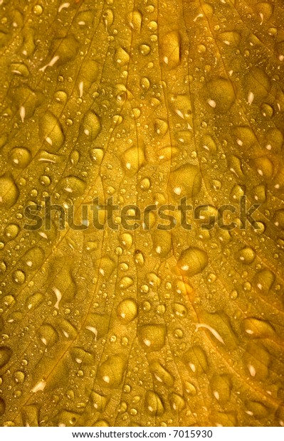 Leaf with water drops macro shot