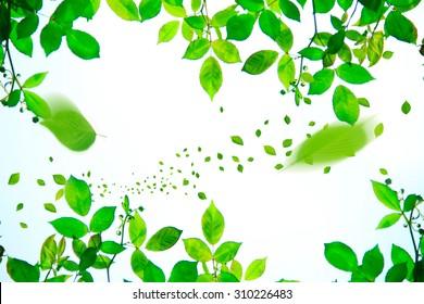 Leaf, wind