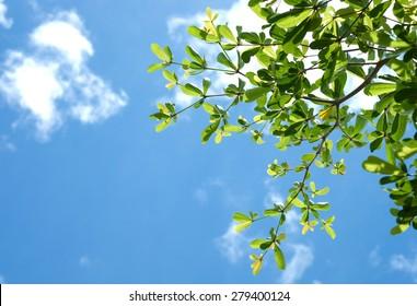 Leafe under blue sky