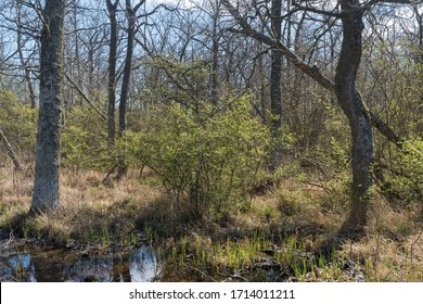 Leafing time in a deciduous forest with new green leafs on the shrubs