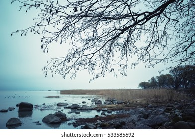 Leafless bare tree silhouette. Still lake coast over night sky background, blue toned photo, old style filter effect