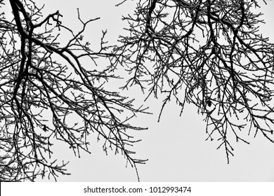 leafless black winter tree branches covered with white snow