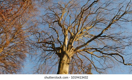 leafless branches of a tall tree in a wood in the mountains against a blue sky
