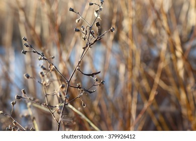 A leafless plant in winter with space for text