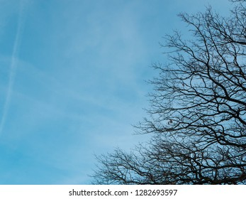 Leafless tree against blue sky with contrails