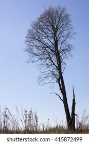 Leafless tree against the blue sky in Finland.