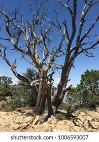Leafless tree in arid land